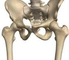 股関節画像